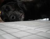 Annie naps while I sew